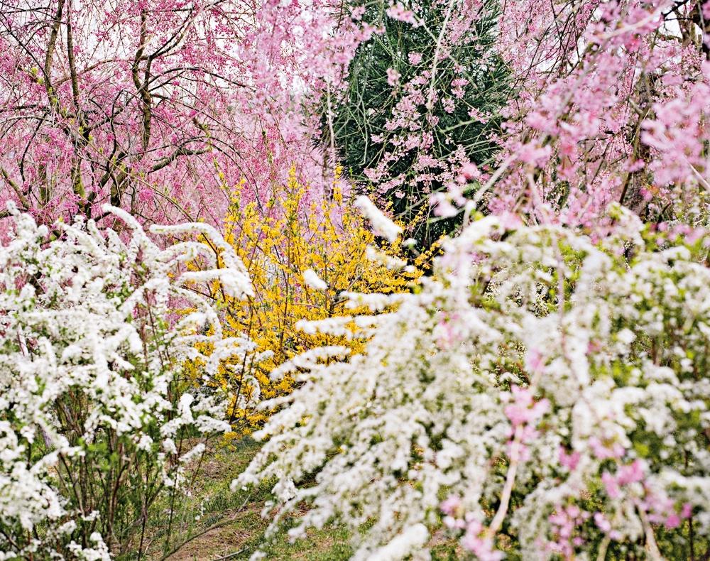 """Jacqueline Hassink<br /> <em>Haradani-en 1 ,Northwest Kyoto,5 April 2010 (11:00–13:00)</em><br /> Chromogenic prints<br /> 24 x 30""""  Edition of 25<br />"""