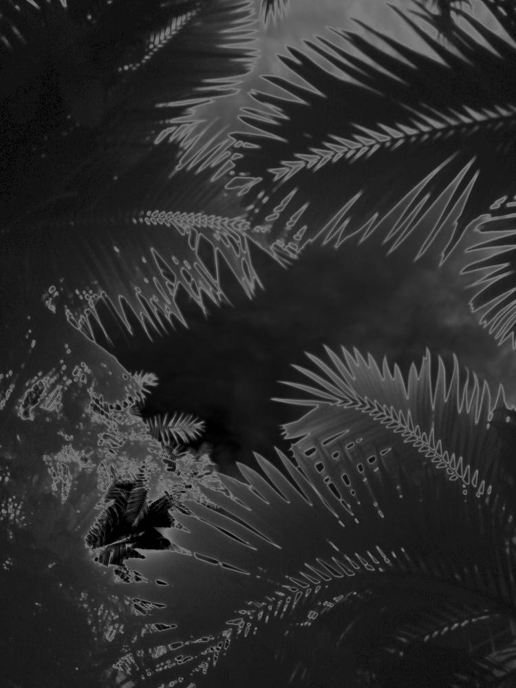 """Karine Laval<br /> <em>Untitled #1</em>from the <em>Black Palms</em>Series, 2014<br /> Chromogenic print<br /> 50 x 40""""  Edition of 5<br />"""