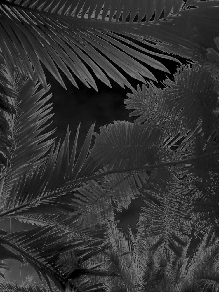 """Karine Laval<br /> <em>Untitled # 3</em>from the <em>Black Palms</em>Series, 2014<br /> Chromogenic print<br /> 50 x 40""""  Edition of 5<br />"""