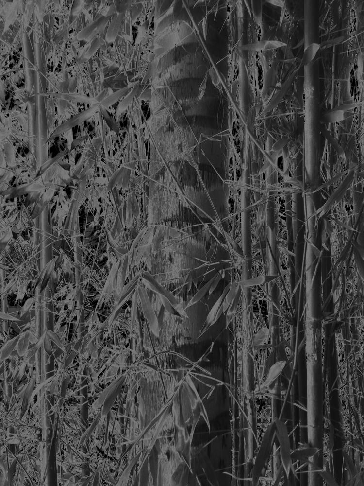 """Karine Laval<br /> <em>Untitled # 5</em>from the <em>Black Palms</em>Series, 2014<br /> Chromogenic print<br /> 50 x 40""""  Edition of 5<br />"""