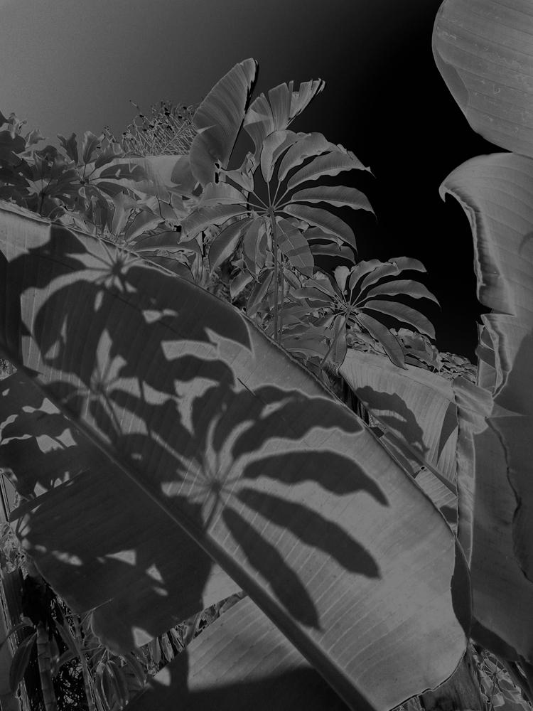 """Karine Laval<br /> <em>Untitled # 8</em>from the <em>Black Palms</em>Series, 2014<br /> Chromogenic print<br /> 50 x 40""""  Edition of 5<br />"""