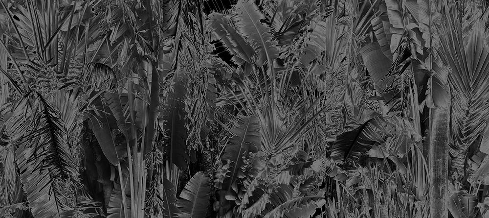 """Karine Laval<br /> <em>Collision,</em>from the <em>Black Palms</em>Series, 2016<br /> Chromogenic print<br /> 50 x 40""""  Edition of 5<br />"""