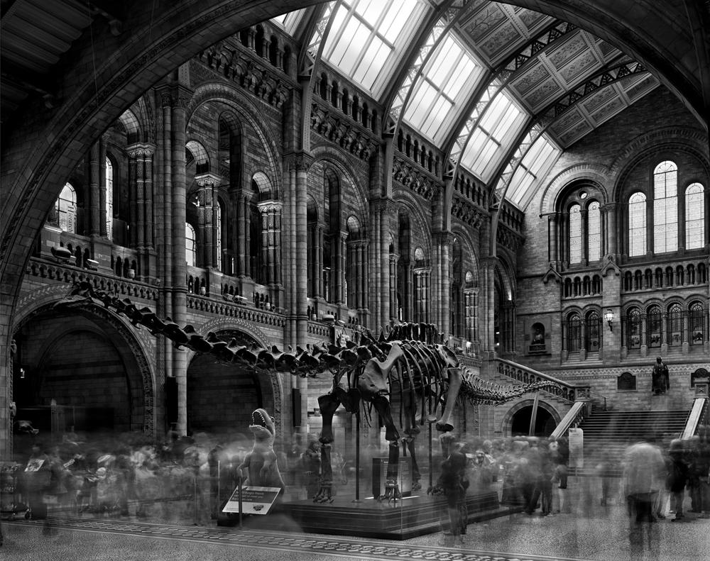 "Matthew Pillsbury<br /> <em>Diplodocus #2, Natural History Museum, London, </em>2007<br /> Archival pigment ink prints<br /> 13 x 19"" Edition of 20<br /> 30 x 40"" Edition of 10<br /> 50 x 60"" Edition of 3"
