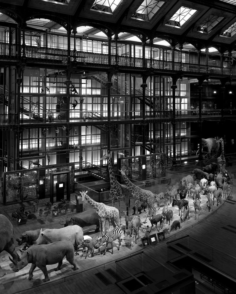 "Matthew Pillsbury<br /> <em>Grande Galerie de l'Evolution, Paris, </em>2008<br /> Archival pigment ink prints<br /> 19 x 13"" Edition of 20<br /> 40 x 30"" Edition of 10<br /> 60 x 50"" Edition of 3"