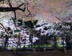 "Matthew Pillsbury<br /> <i>Hanami 25, Chidorigafuchi, Wednesday April 1st, 2015</i>(TV15025)<br /> Archival pigment ink prints<br /> 20 x 24""   Edition of 10<br /> 30 x 40""   Edition of 6 (plus 2 APs)<br /> 50 x 60""   Edition of 2 (plus 1 AP)"