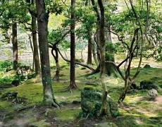 "Jacqueline Hassink<br /> <em>Saihō-ji 10, summer,Southwest Kyoto,30 May 2009 (13:00–15:00)</em><br /> Chromogenic prints<br />41 x 51"" and 50 x 63""  Shared edition of 7<br />"